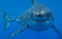 Dientes de tiburón para implantes óseos o dentales